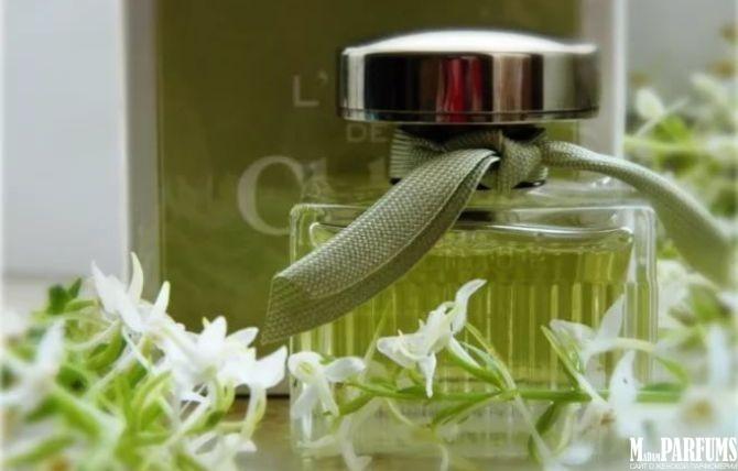 Особенности группы шипровых ароматов