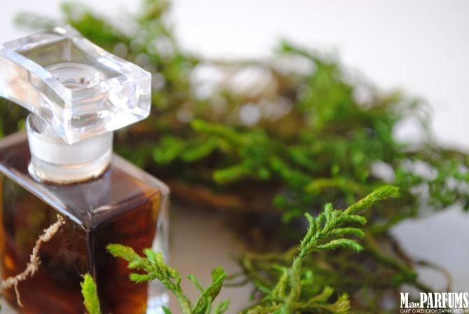 Особенности группы фужерных ароматов