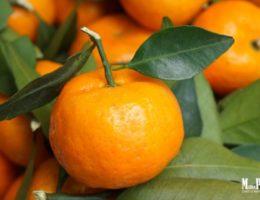 Аромат мандарина в женской парфюмерии