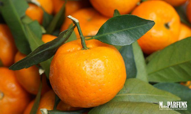 Аромат мандарина в парфюмерии для женщин