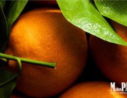 Особенности группы цитрусовых ароматов