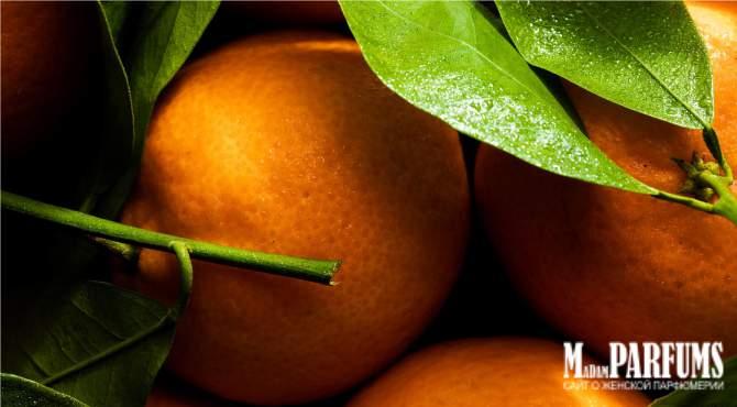 Описание группы цитрусовых ароматов для женщин
